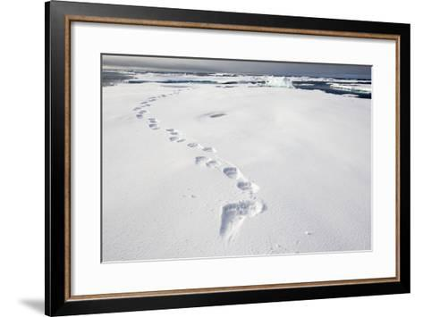 Polar Bear Tracks in Fresh Snow at Spitsbergen Island-Paul Souders-Framed Art Print