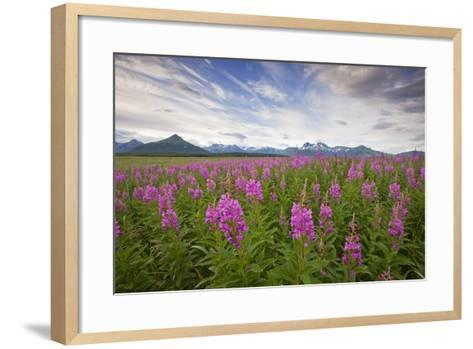 Fireweed in Meadow at Hallo Bay in Katmai National Park-Paul Souders-Framed Art Print