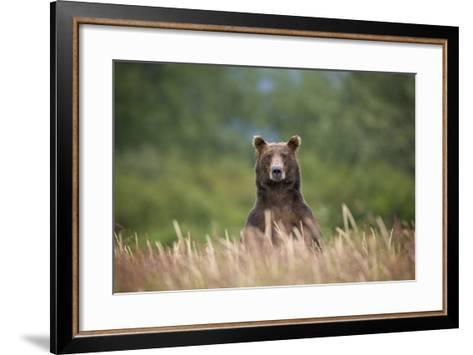 Grizzly Bear Standing over Tall Grass at Kukak Bay-Paul Souders-Framed Art Print