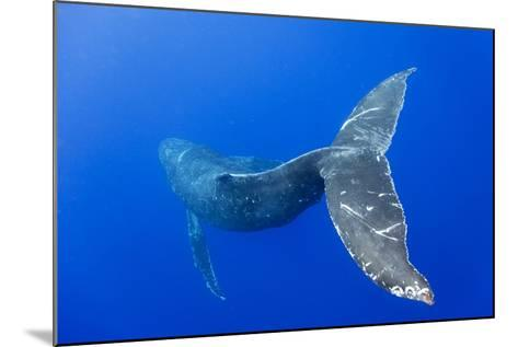 Humpback Whale Diving from Surface-Paul Souders-Mounted Photographic Print