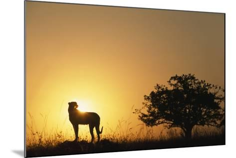 Silhouette of Cheetah and Tree-Paul Souders-Mounted Photographic Print