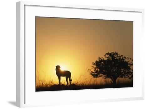 Silhouette of Cheetah and Tree-Paul Souders-Framed Art Print