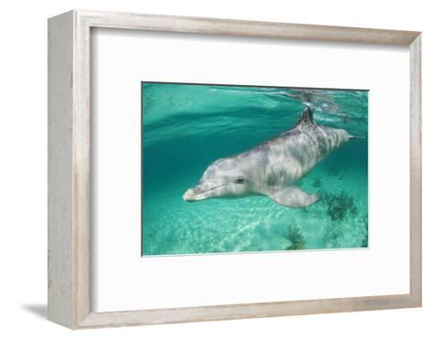 Bottlenosed Dolphin at UNEXSO Dive Site-Paul Souders-Framed Art Print