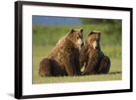 Two Brown Bears Sitting in Meadow at Hallo Bay-Paul Souders-Framed Art Print