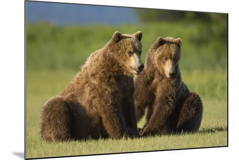 Two Brown Bears Sitting in Meadow at Hallo Bay-Paul Souders-Mounted Photographic Print