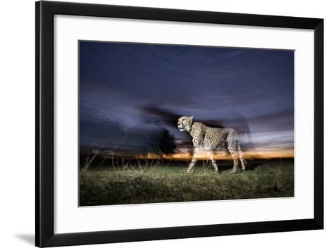 Cheetah at Dusk-Paul Souders-Framed Art Print