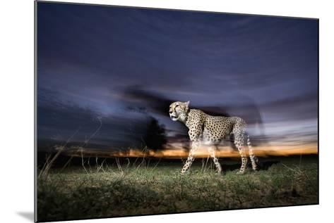 Cheetah at Dusk-Paul Souders-Mounted Photographic Print