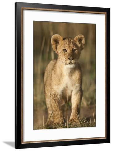 Lion Cub on Savanna in Masai Mara National Reserve-Paul Souders-Framed Art Print
