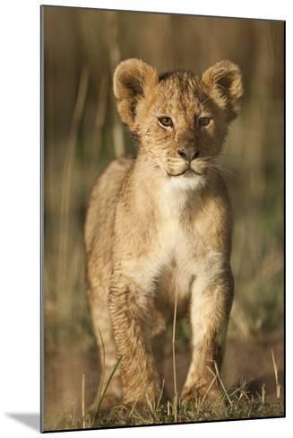 Lion Cub on Savanna in Masai Mara National Reserve-Paul Souders-Mounted Photographic Print
