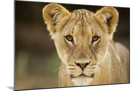 Lion in Kgalagadi Transfrontier Park-Paul Souders-Mounted Photographic Print