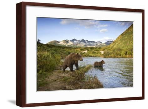 Two Year Old Grizzly Bears on Riverbank at Kinak Bay-Paul Souders-Framed Art Print
