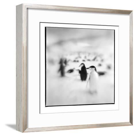 Chinstrap Penguins, Antarctica-Paul Souders-Framed Art Print