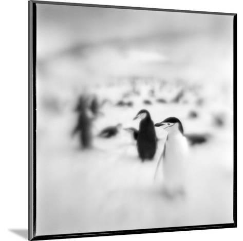 Chinstrap Penguins, Antarctica-Paul Souders-Mounted Photographic Print