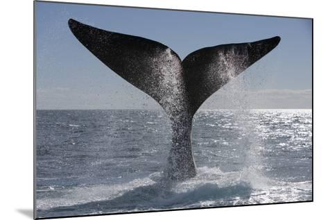 Southern Right Whale Off Peninsula Valdes, Patagonia-Paul Souders-Mounted Photographic Print