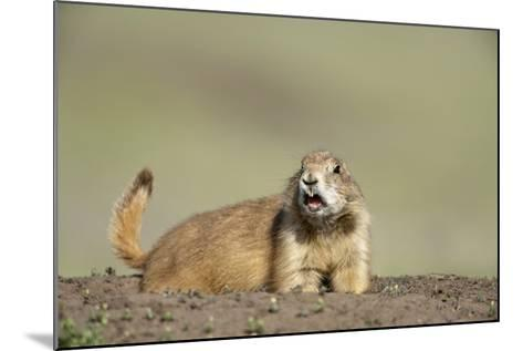 Prairie Dog in Theodore Roosevelt National Park-Paul Souders-Mounted Photographic Print