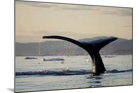 Humpback Whale in Disko Bay in Greenland-Paul Souders-Mounted Photographic Print