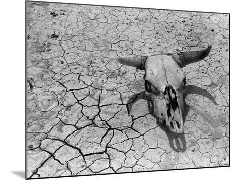 Cattle Skull on the Parched Earth-Arthur Rothstein-Mounted Photographic Print