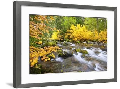 Fall Colors Along Santiam River, Willamette National Forest, Oregon Cascades, Pacific Northwest-Craig Tuttle-Framed Art Print