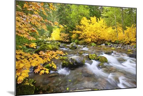 Fall Colors Along Santiam River, Willamette National Forest, Oregon Cascades, Pacific Northwest-Craig Tuttle-Mounted Photographic Print
