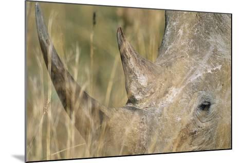 White Rhinoceros--Mounted Photographic Print