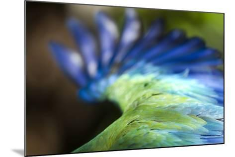 Green Macaw, Costa Rica--Mounted Photographic Print