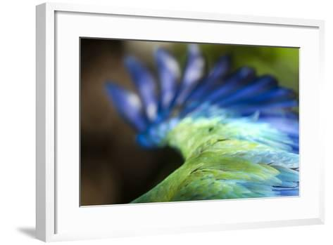 Green Macaw, Costa Rica--Framed Art Print