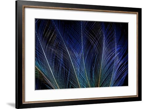 Display Feathers of Blue Bird of Paradise-Darrell Gulin-Framed Art Print