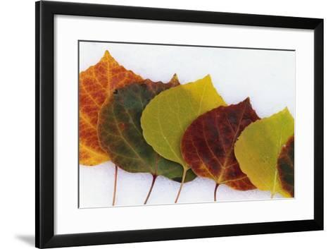 Aspen Leaves on Snow-Darrell Gulin-Framed Art Print