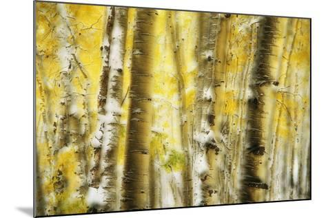 Aspen Grove Blanketed with Snow-Darrell Gulin-Mounted Photographic Print