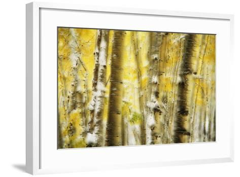 Aspen Grove Blanketed with Snow-Darrell Gulin-Framed Art Print