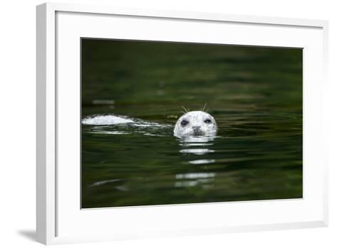 Harbor Seal, British Columbia, Canada--Framed Art Print