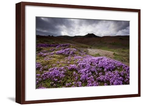 Summer Wildflowers in Iceland--Framed Art Print