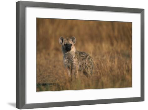 Spotted Hyena Pup--Framed Art Print