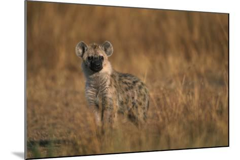 Spotted Hyena Pup--Mounted Photographic Print