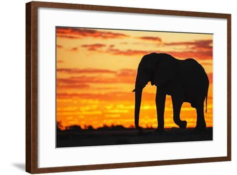 A Silhouette of a Large Male African Elephant Against a Golden Sunset-Jami Tarris-Framed Art Print