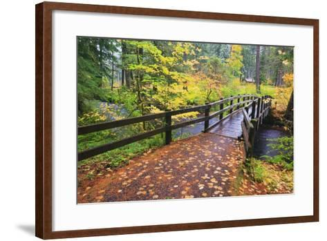 Fall Colors Add Beauty to South Trail at Silver Falls State Park, Oregon, USA-Craig Tuttle-Framed Art Print