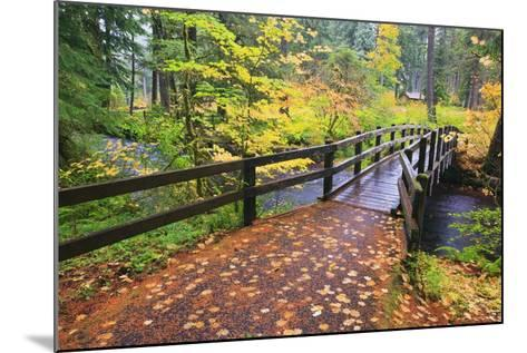 Fall Colors Add Beauty to South Trail at Silver Falls State Park, Oregon, USA-Craig Tuttle-Mounted Photographic Print