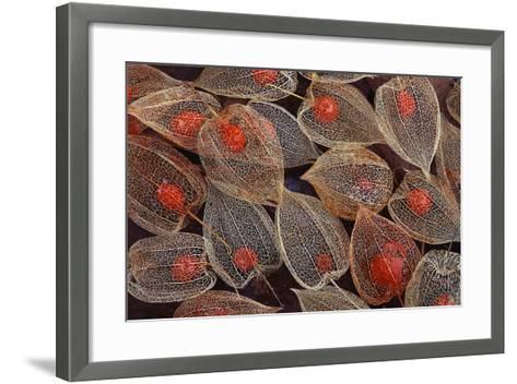 Fruits of a Chinese Lantern Plant-Darrell Gulin-Framed Art Print