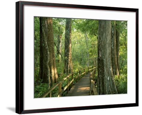 Boardwalk Through Forest of Bald Cypress Trees in Corkscrew Swamp-James Randklev-Framed Art Print