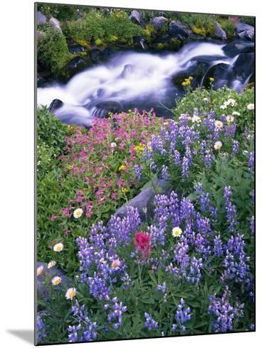 Wildflowers Blooming Along Rushing Creek-Craig Tuttle-Mounted Photographic Print