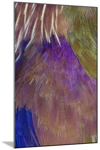 Neck and Chest Feather Pattern of Roufus-Crowed Roller-Darrell Gulin-Mounted Photographic Print