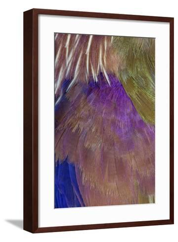 Neck and Chest Feather Pattern of Roufus-Crowed Roller-Darrell Gulin-Framed Art Print