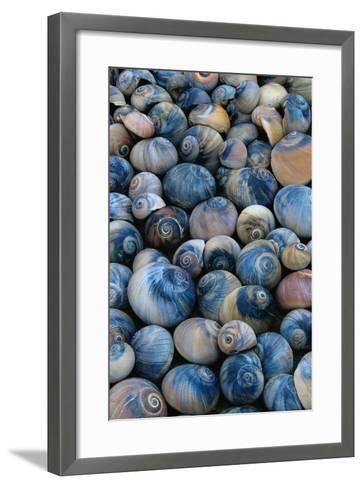 Shells-Darrell Gulin-Framed Art Print