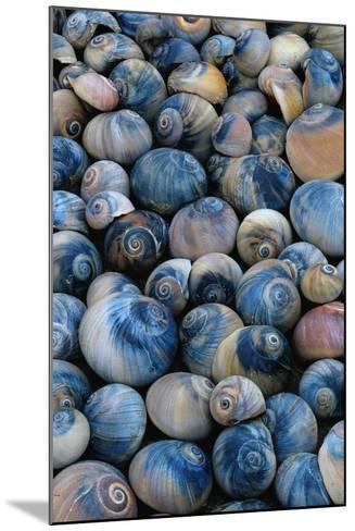 Shells-Darrell Gulin-Mounted Photographic Print