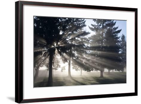Sunrise Through Fog and Trees, Willamette Valley, Oregon-Craig Tuttle-Framed Art Print