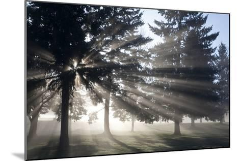 Sunrise Through Fog and Trees, Willamette Valley, Oregon-Craig Tuttle-Mounted Photographic Print