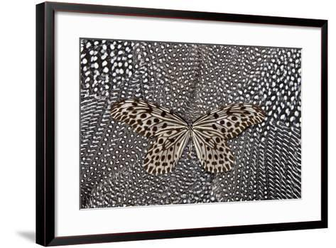 Paper Kite Butterfly on Black and White Guinea Fowl Feathers Design-Darrell Gulin-Framed Art Print