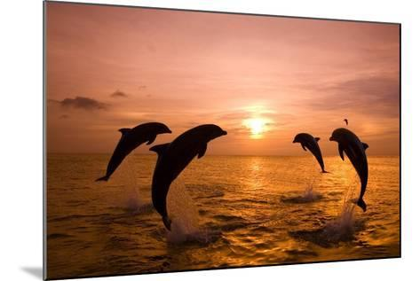 Bottlenosed Dolphins Jumping-Craig Tuttle-Mounted Photographic Print