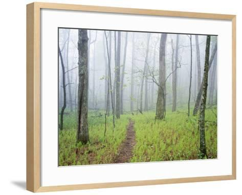 Oak Forest in Fog-James Randklev-Framed Art Print