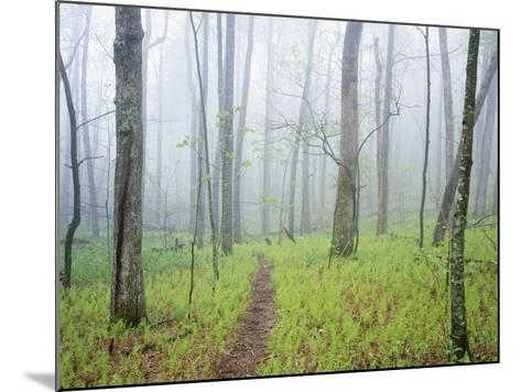 Oak Forest in Fog-James Randklev-Mounted Photographic Print